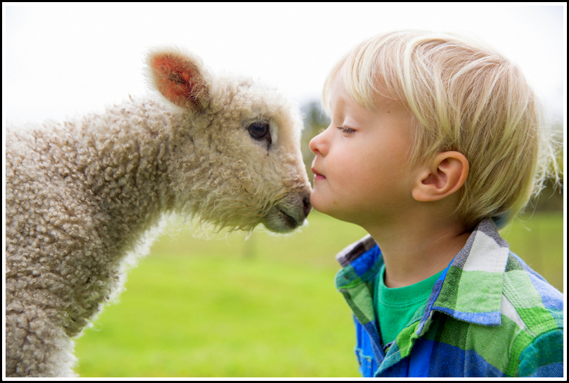Lamb and Boy